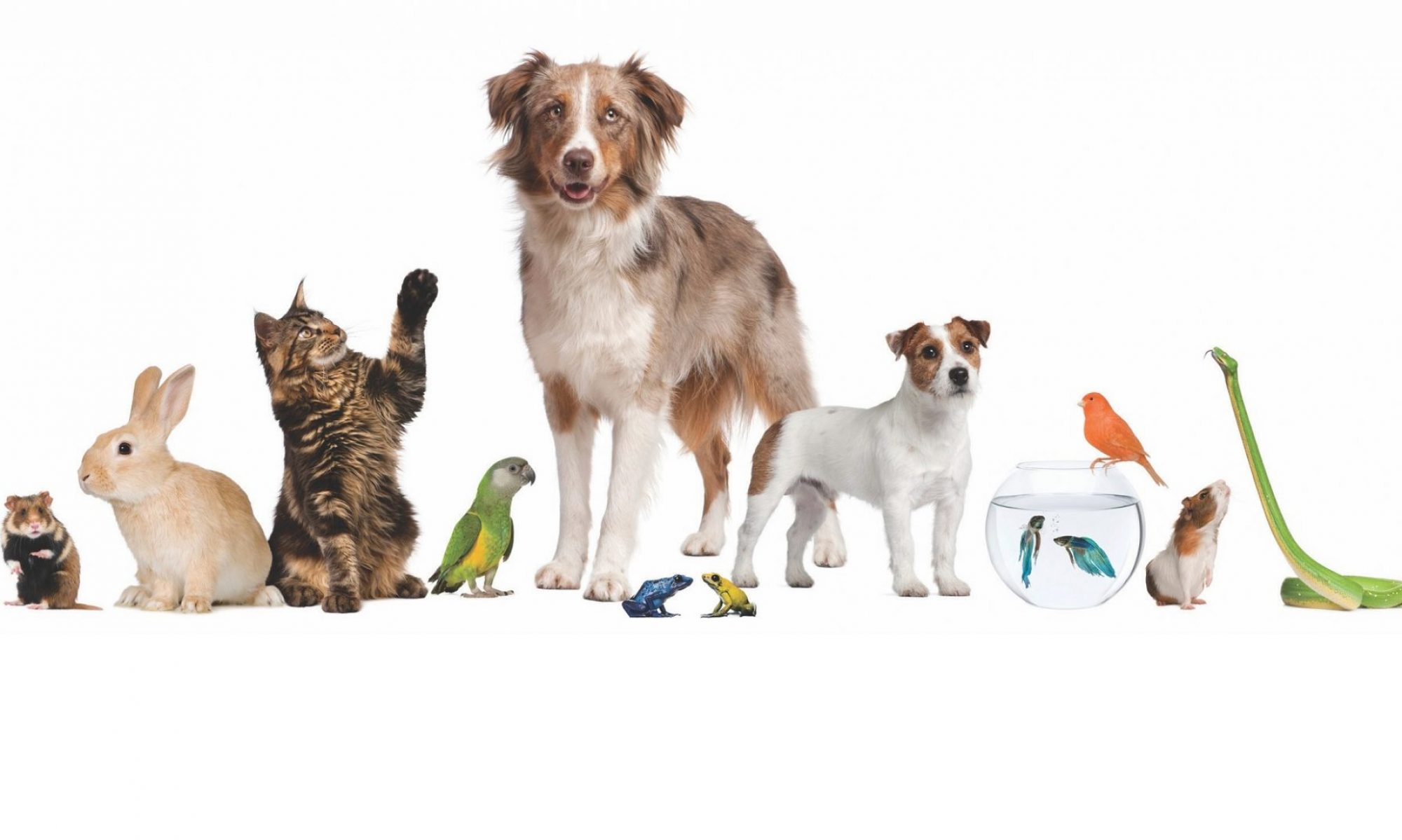 Any Pet Sitting and Walking Service